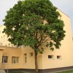 III Ligoninė